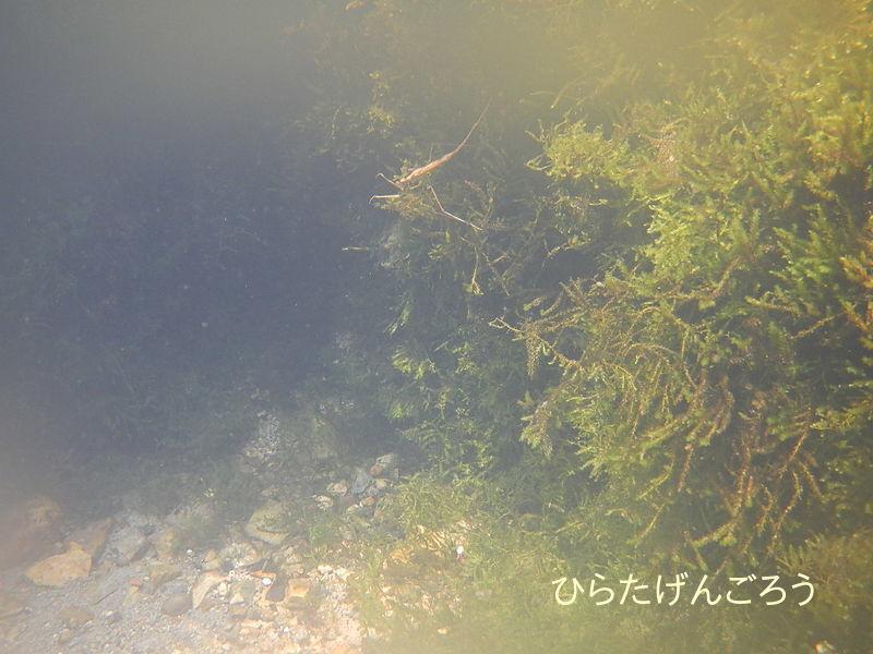 spring water②