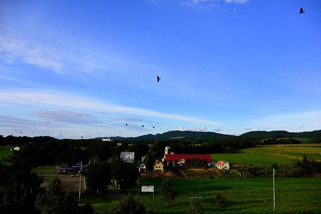 鳥の飛ぶ夕暮れ