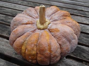 菊座かぼちゃ 表面