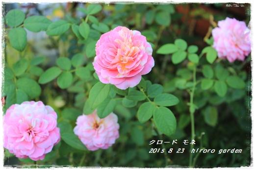 IMG_735311.jpg
