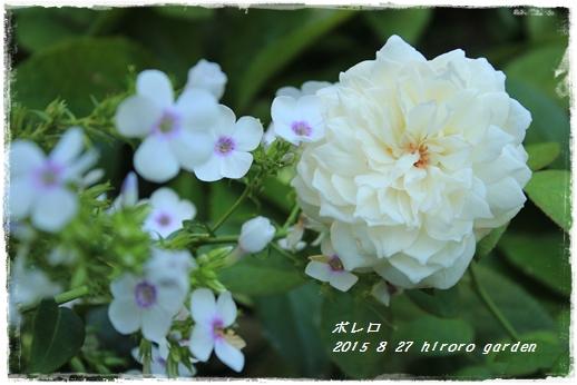 IMG_738411.jpg