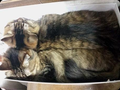 猫の開き1