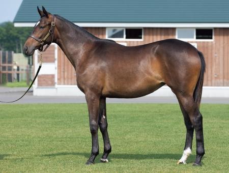 horse_photo (1)