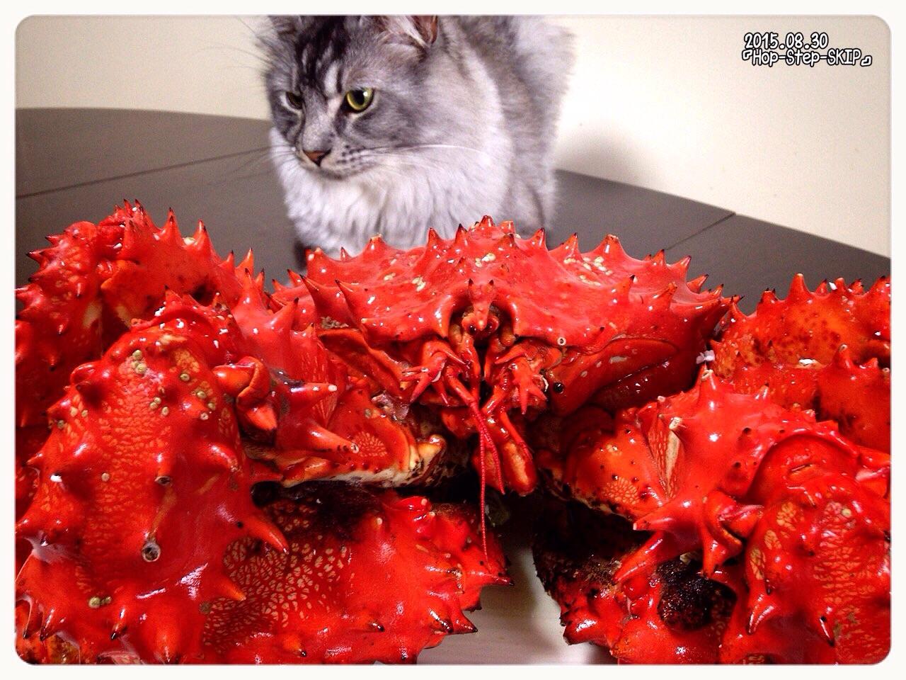 2『 花咲蟹も黙っちゃいない!日本晴れの北方領土の蟹うめぇ! だっぺ 』