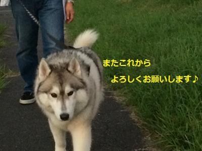217_convert_20151001203711.jpg