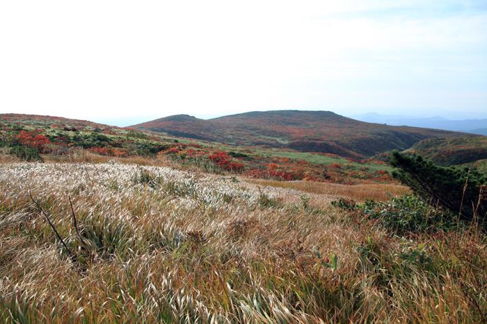 o150923草紅葉と東栗駒山