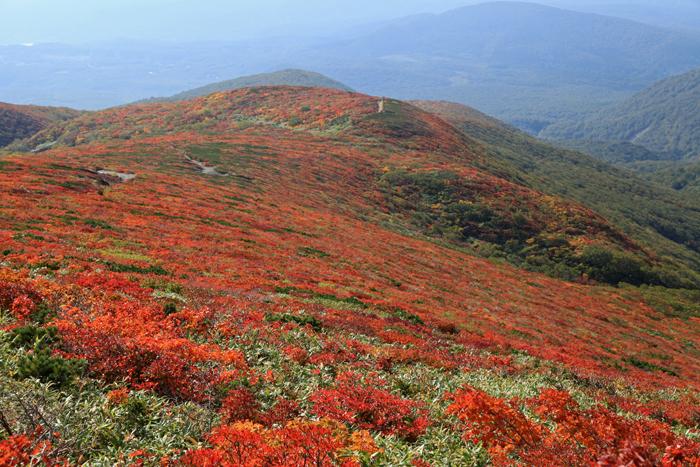 r150923栗駒山の中央コースの紅葉
