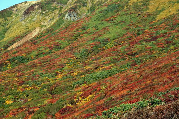 v150923栗駒山の紅葉b