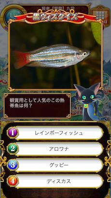 観賞用として人気のこの熱帯魚は何?
