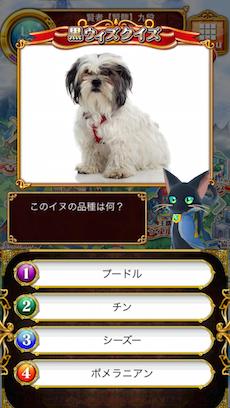 このイヌの品種は何?