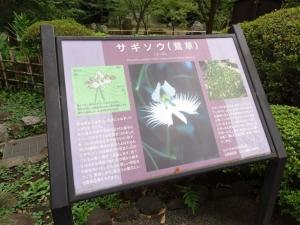 鷺草の説明板