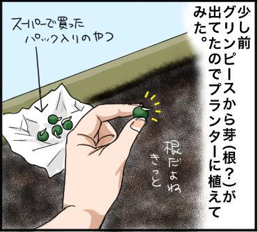 グリンピース1