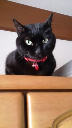 悪猫 ミー太