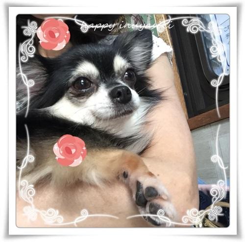 mini3IMG_7519-20150920.jpg