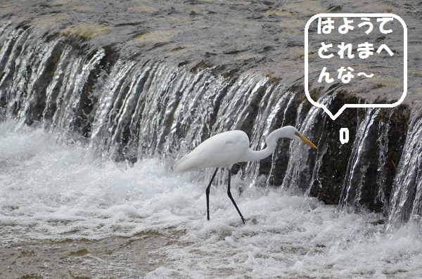 DSC_1518.jpg