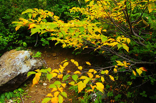 栗駒山の黄葉