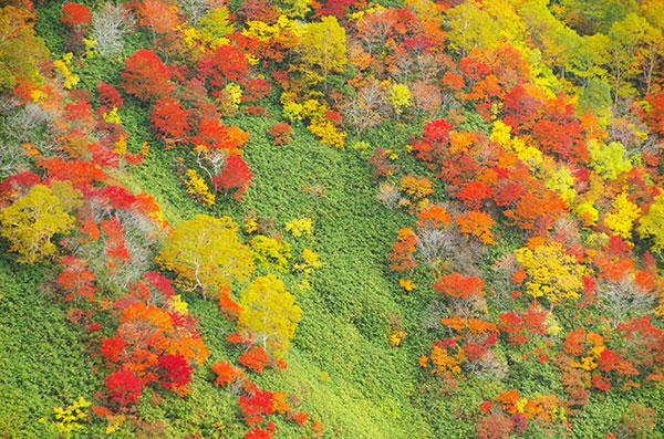 犬倉岳斜面の紅葉
