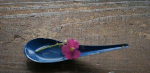 IMG_0010 花と蓮華