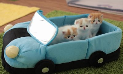 4-Week-Old Kittens Going on a Car Ride_fc2