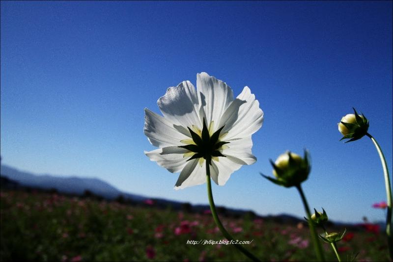 IMG_9672(blog).jpg