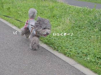おさんぽ20150718-1