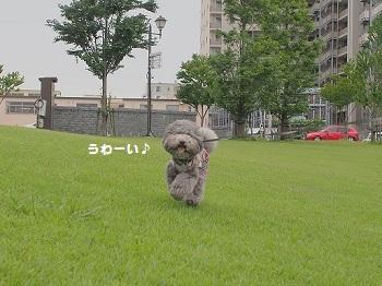 おさんぽ20150718-2