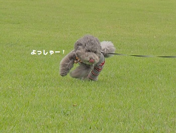 おさんぽ20150718-3