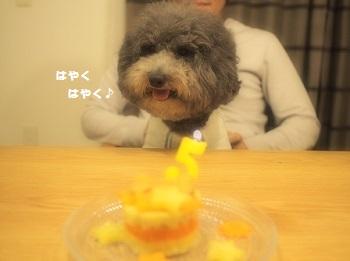 ジジさん5歳のお誕生日-9