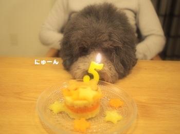 ジジさん5歳のお誕生日-10
