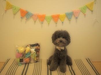 ジジさん5歳のお誕生日プレゼント-1