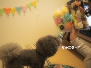 ジジさん5歳のお誕生日プレゼント-3