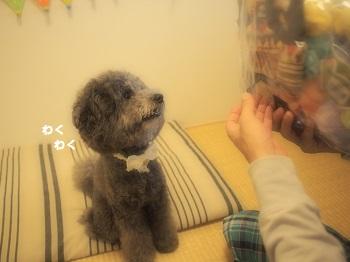 ジジさん5歳のお誕生日プレゼント-5