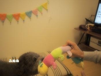 ジジさん5歳のお誕生日プレゼント-8
