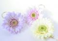 15_09_04_flower01.jpg