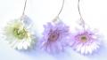 15_09_04_flower03.jpg