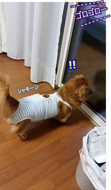犬太郎vs雷