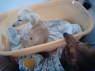 犬太郎とちゃんこ