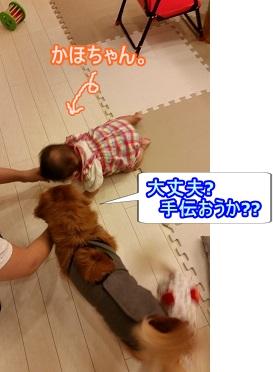 かほちゃんと犬太郎