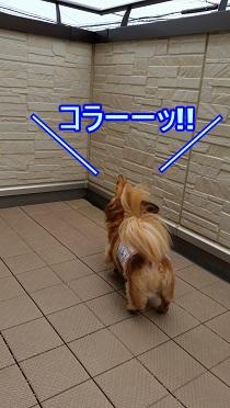 吠える犬太郎