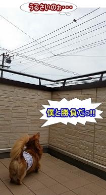 無視される犬太郎