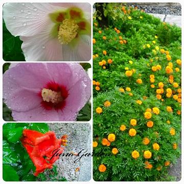 遊歩道の花1509