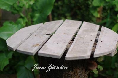 梅の木テーブル1520