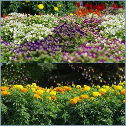 1植物園1508