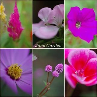ピンクの花1511