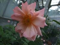 2015-09-19-秋バラ園ー057