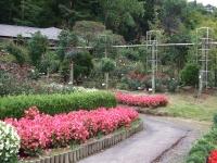 2015-09-19-秋バラ園ー114