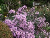 2015-09-19-秋バラ園ー121