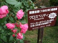 2015-09-19-秋バラ園ー145