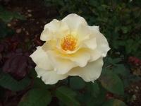 2015-09-19-秋バラ園ー152