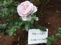 2015-09-19-秋バラ園ー158